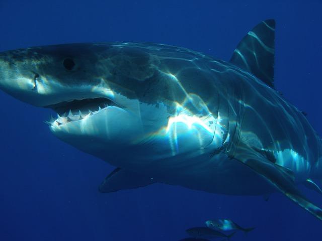 Jacksonville University SharkResearch